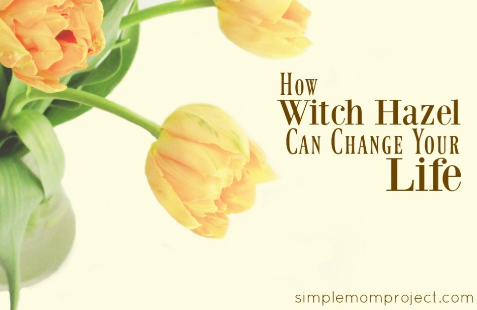 8 SHOCKING WAYS WITCH HAZEL CAN CHANGE YOUR LIFE IN