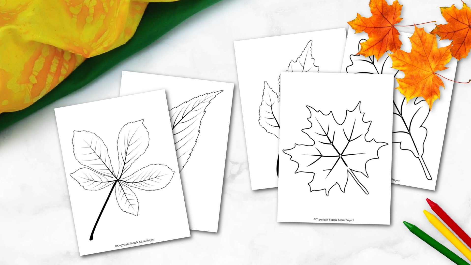 Free Printable Autumn and Fall Leaf Template, Stencil and Pattern