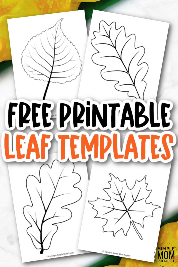 Looking for an autumn leaf craft idea? Use these free large printable leaf cutout templates so spark your creativity! These fall leaf stencils make a perfect easy coloring page for preschoolers or have your kindergartner paint them as fall decorations! From maple leaf to classic printable leaf templates, there's a fall leaf printable cut out for you!