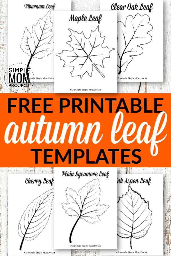 Free Printable Large leaf template outlines, stencils and patterns