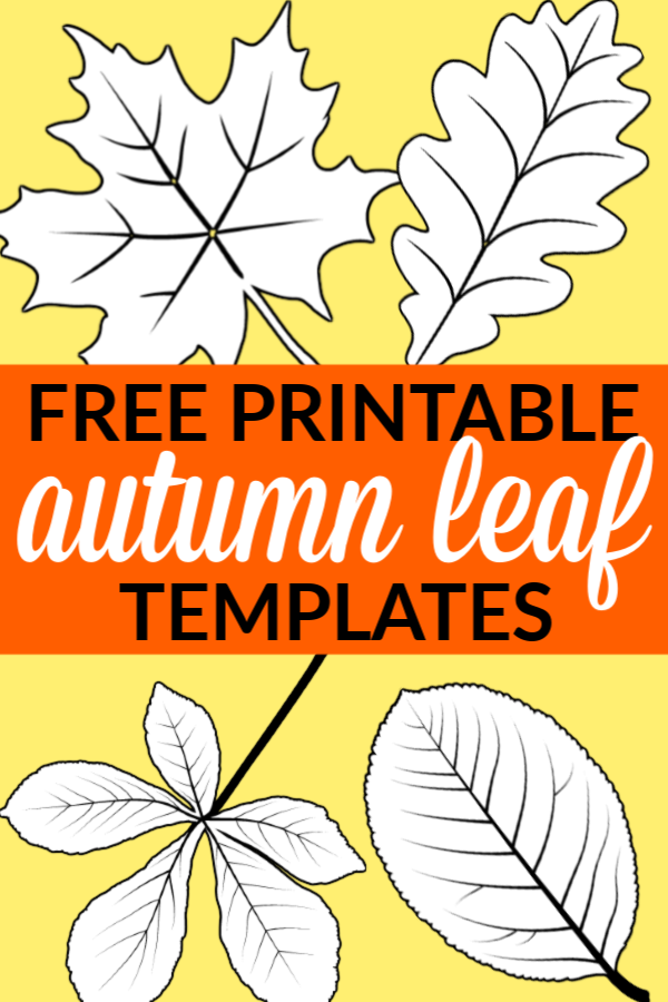 Looking for an autumn leaf craft idea? Use these free large printable leaf cutout templates so spark your creativity! These fall leaf stencils make a perfect easy coloring page for preschoolers or have your kindergartner paint them as fall decorations! #LeafTemplates #AutumnLeaves #FallLeaf #LeafCraft #SimpleMomProject