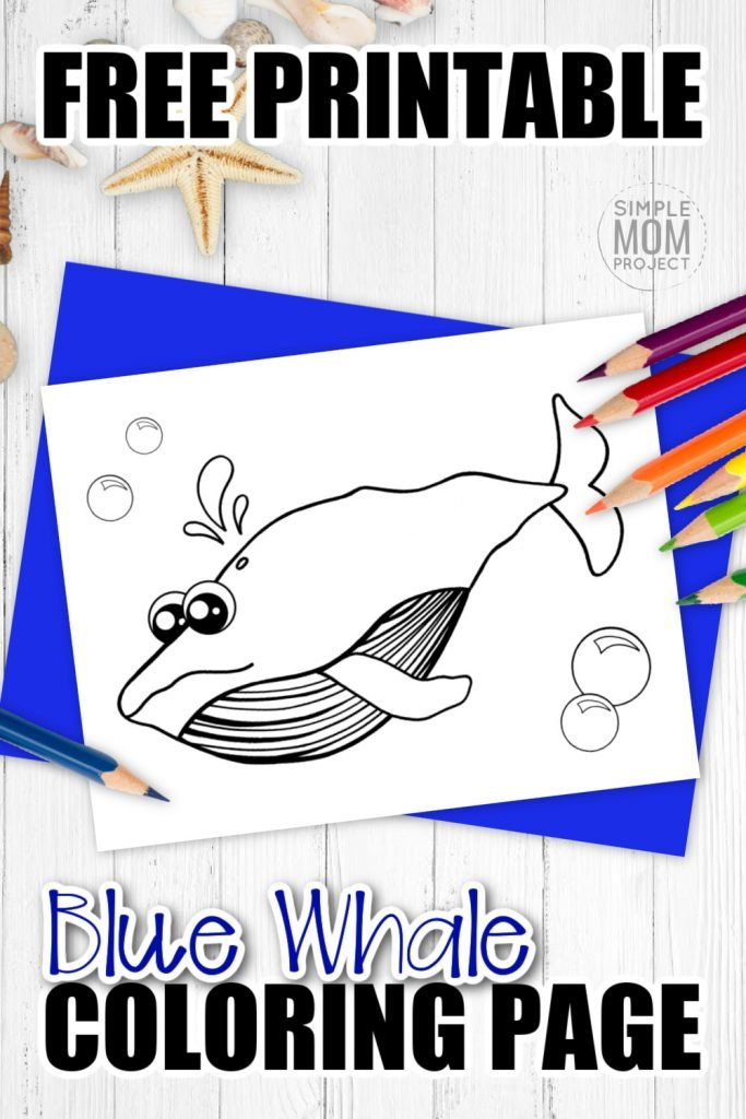 Are you looking for a cute blue whale coloring cartoon page to add to your ocean animal coloring book? Click now to download this free printable fun friend of the humpback, killer and sperm whale; the blue whale! He is perfect for kids of all ages to add to their art collections in preschool or to hang up on the will in their kindergarten classroom. #bluewhalecoloring #whalecoloring #SimpleMomProject