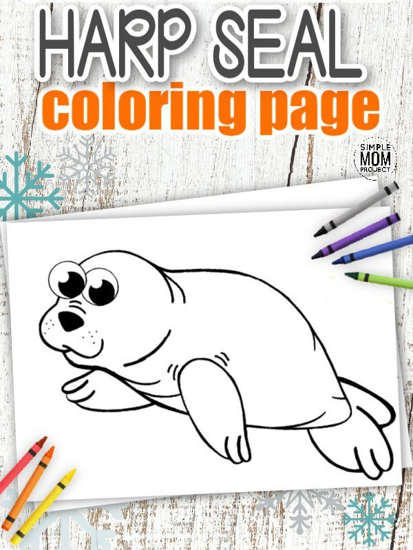 Download Printable Simple Arctic Animal Harp Seal Coloring Page for kids preschoolers and toddlers