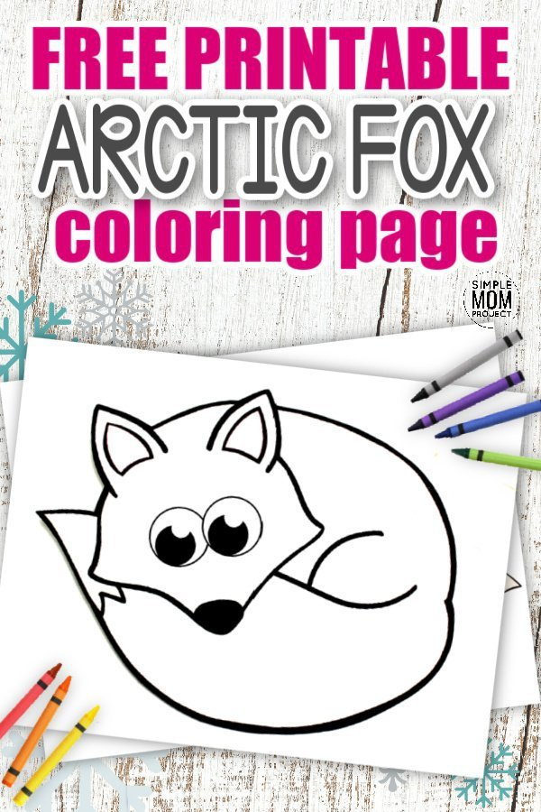 Are you looking for a cute & simple Baby Fox coloring page for your kids? Click now & grab your Free Printable Arctic Fox template. Amaze at the big bushy tail, the cheeky smile & the realistic button nose as you share the secrets your fox uses to sleep & survive all those cold winter nights. Such a cute & clever animal, the Arctic Fox coloring pages are ready for you to download with your kids today!#Foxcoloringpages #ArcticFoxcoloringpages #Arcticanimalcoloringpages #SimpleMomProject