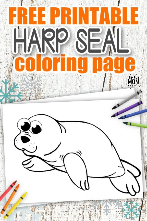 Adding a cute Harp Seal is a really fun way to teach your kid about the Letter S when homeschooling this year. This free printable Harp Seal template is a must have for your toddlers Arctic Animals Coloring Book or as a simple wall decoration for display at home. Preschoolers love this as a special art project so click here and grab your free printable Harp Seal coloring page today! #Sealcoloringpages #ArcticAnimalcoloringpages #HarpSealcoloringpages #SimpleMomProject