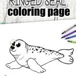 Here's your chance to add one of the most popular Arctic animals to your kids coloring pages. This cute baby Ringed Seal Coloring page comes with free printable templates which beautifully capture his big eyes and happy smile. It's a fun and simple way to bring Arctic Animal coloring pages into your home whilst teaching the Letter S. So click here to get your free printable Ringed Seal Coloring page today! #Sealcoloringpages #RingedSealcoloringpages #Arcticanimalcoloringpages #SimpleMomProject
