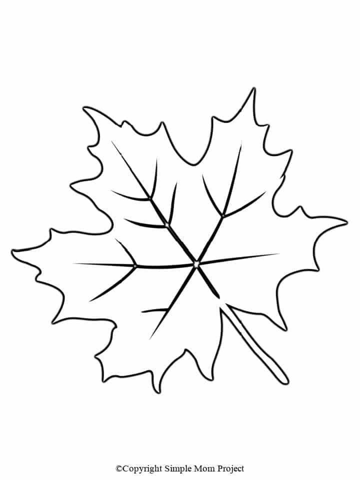 Printable Large leaf Template for Fall Crafts, Spring Crafts