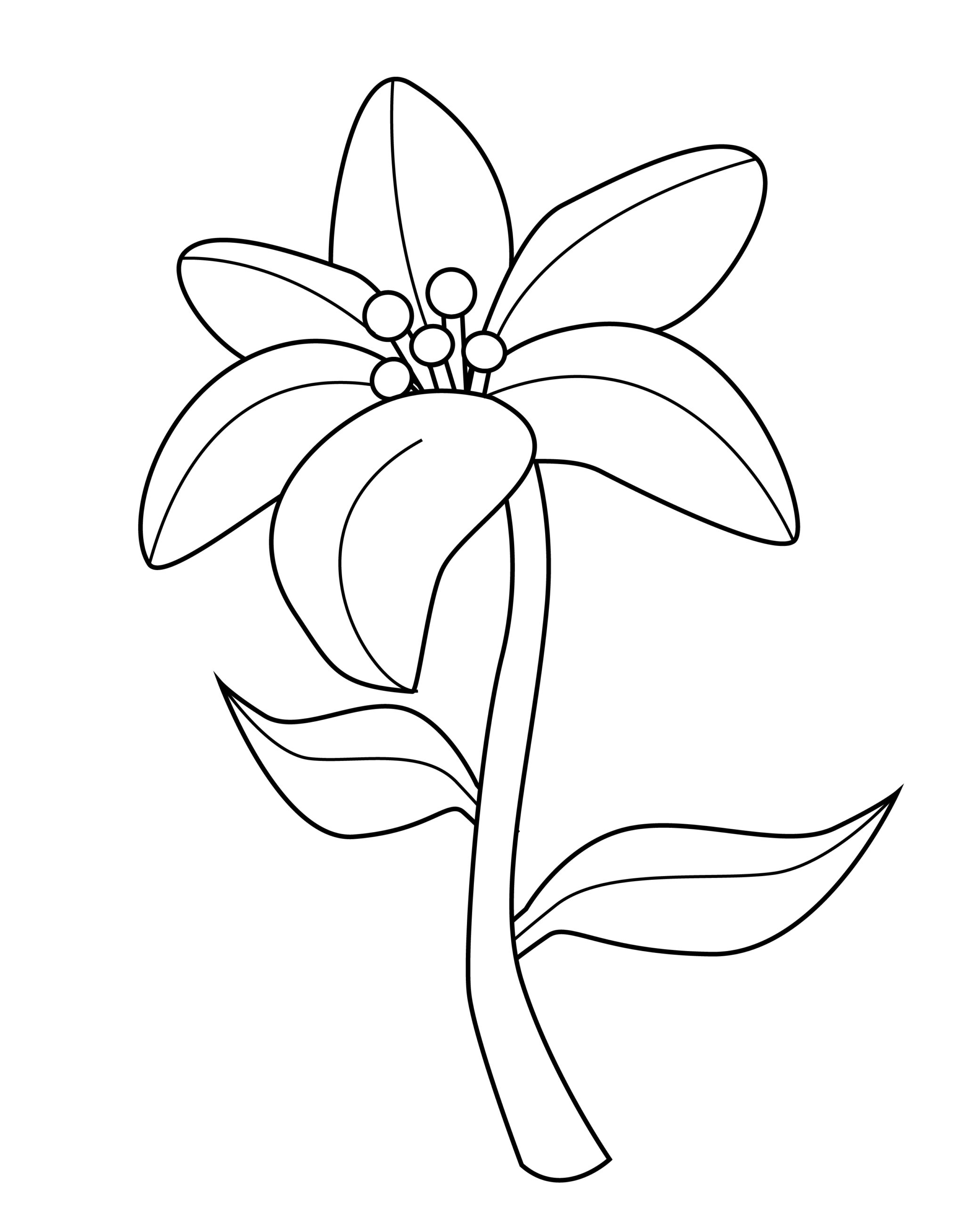 Printable lily template for summer template crafts for kids, preschoolers and toddlers